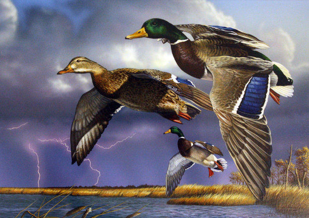Duck Hunting News – March 2014