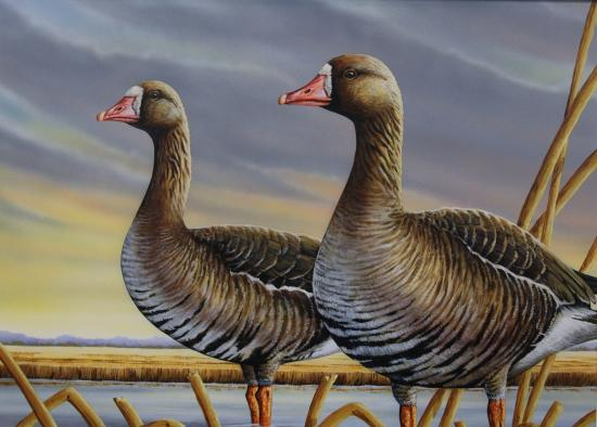 Lousiana Duck Hunting Stamp Contest 2015