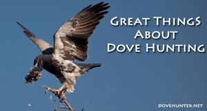 Great Things about Dove Hunting